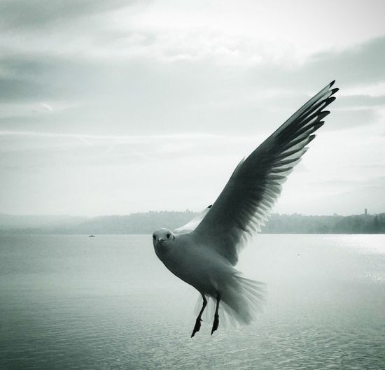 Hello Seagull From My Point Of View IPhoneography Chilly Day Bird Zurich, Switzerland Flying Seagull Check This Out Looking At Me Showcase: November It's Cold Outside Better Look Twice Photography In Motion