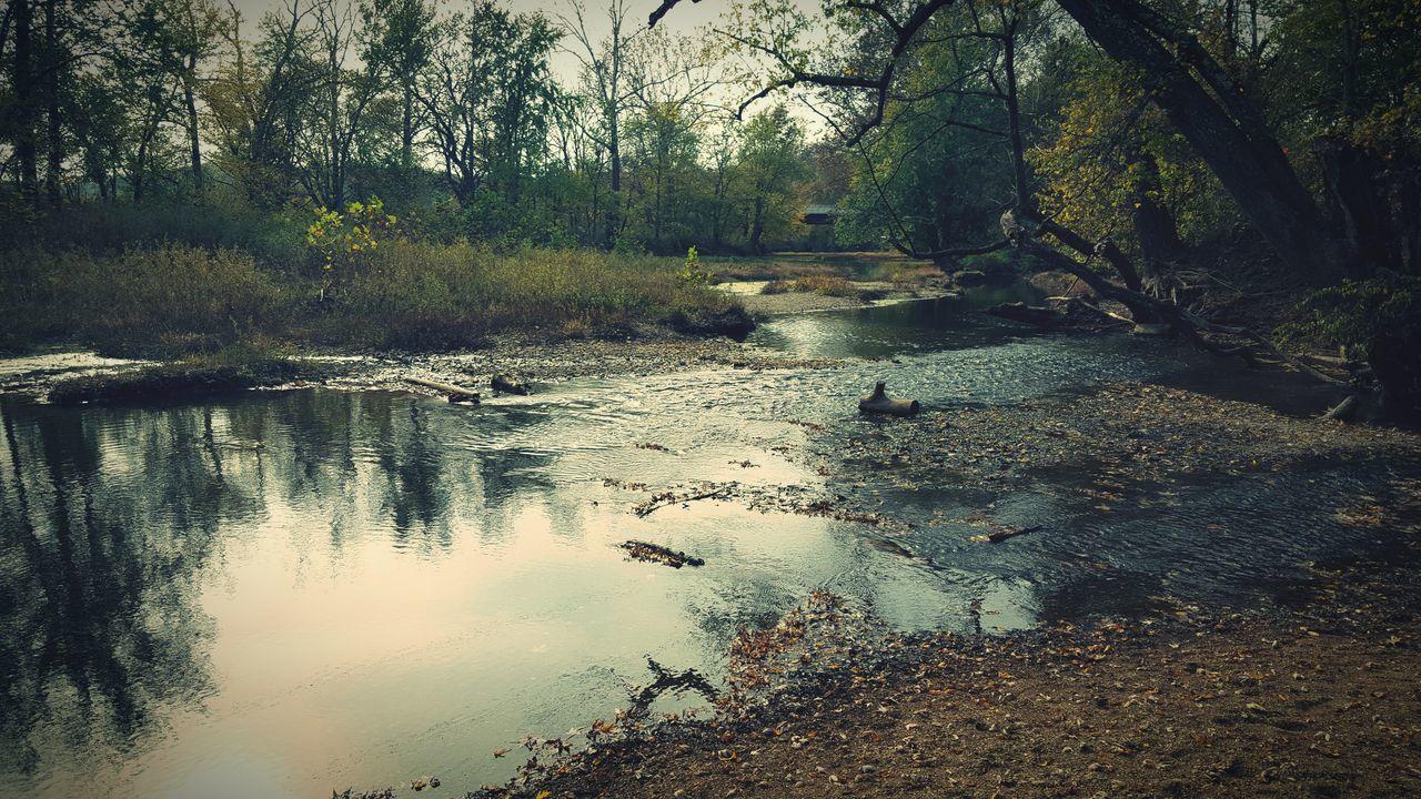 walk in the park. Outdoors Fall Autumn🍁🍁🍁 Trees Tree Creekside Creek Creekside Trail Leaves Leaf Hiking Trail