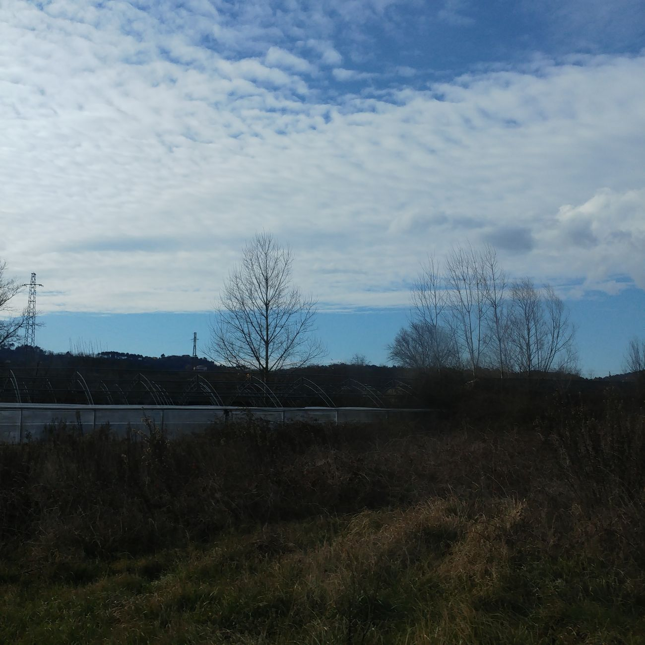 Capture Blue Sky White Clouds Cirrocumulus Winter Trees Trees Brown Green Grass Roadtrip Inthecar Winter Landscape Viewfrommycar View Beauty In Nature Nature Mood Photooftheday Italy Toscana