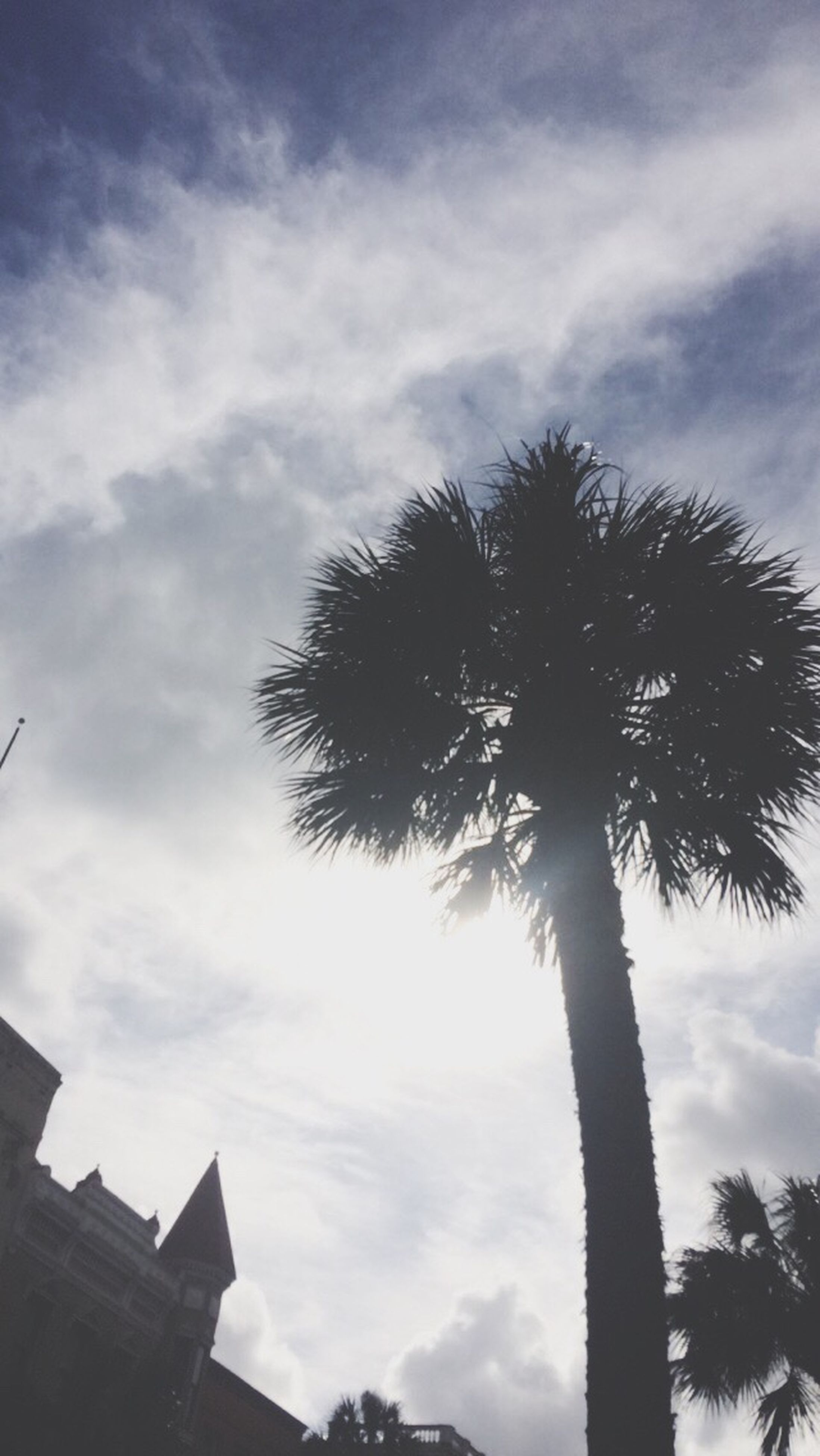 low angle view, tree, sky, palm tree, silhouette, cloud - sky, built structure, architecture, building exterior, cloudy, cloud, growth, branch, tree trunk, nature, outdoors, no people, tall - high, day, high section
