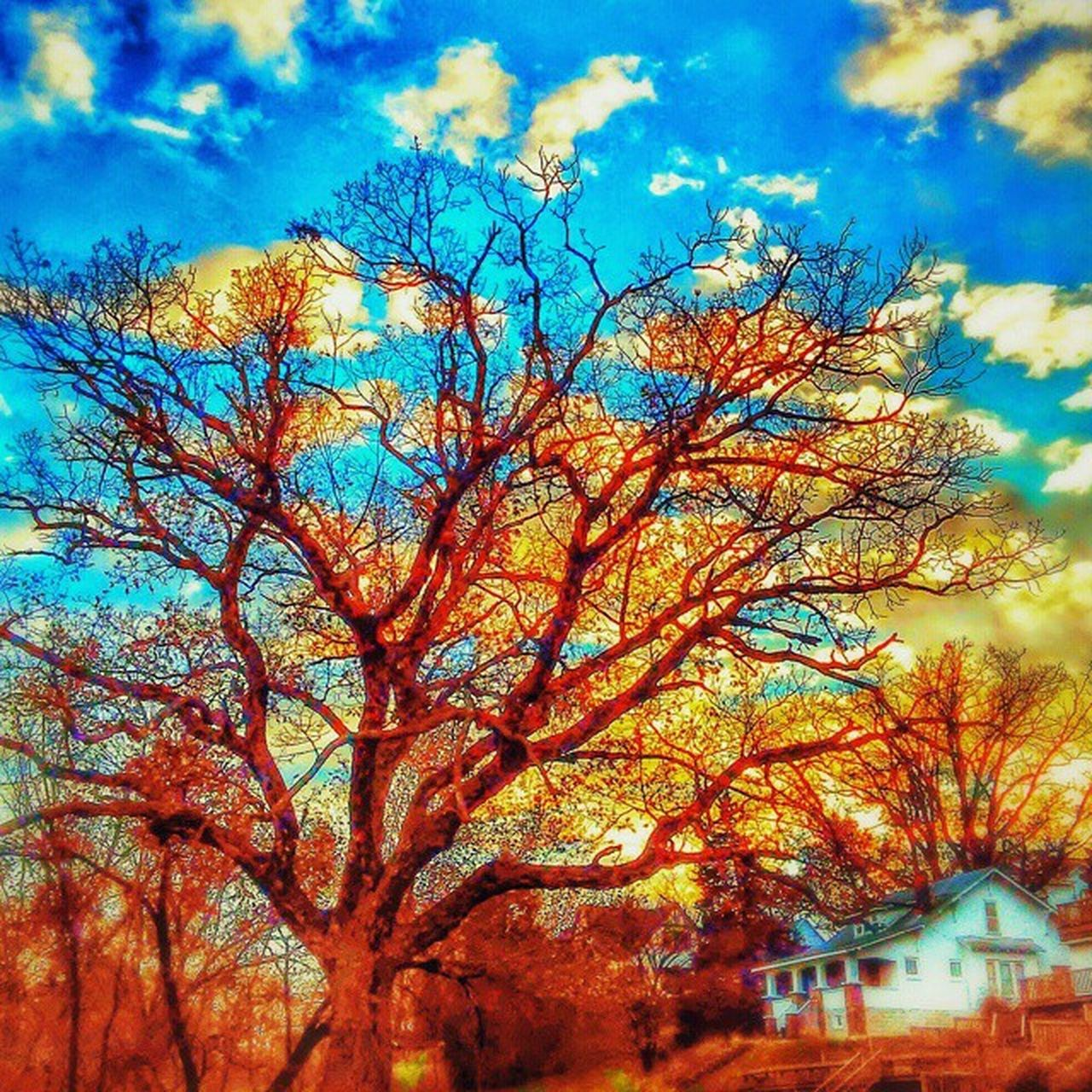 tree, sky, low angle view, no people, beauty in nature, nature, branch, bare tree, outdoors, built structure, day, scenics, tranquility, autumn, growth, building exterior, architecture