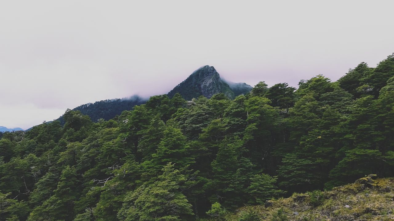 mountain, nature, beauty in nature, sky, no people, scenics, tranquility, day, outdoors, lush foliage, tranquil scene, landscape, mountain range, green color, clear sky, peak, tree