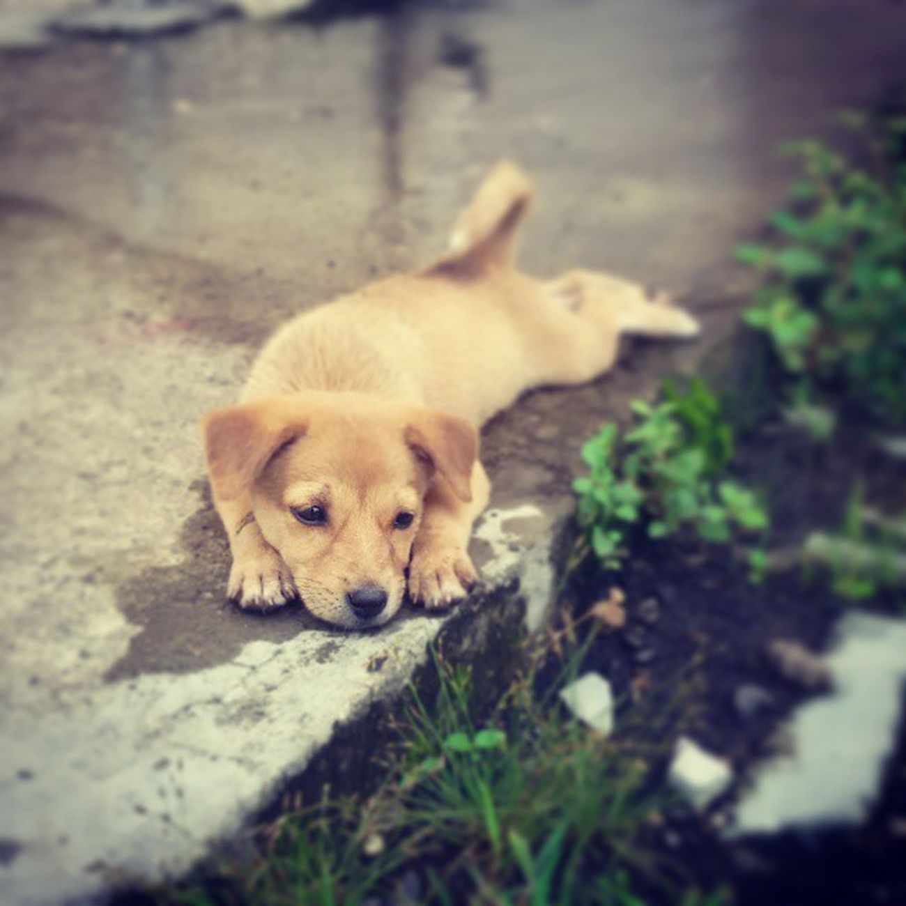 Pup Hostel Vnit