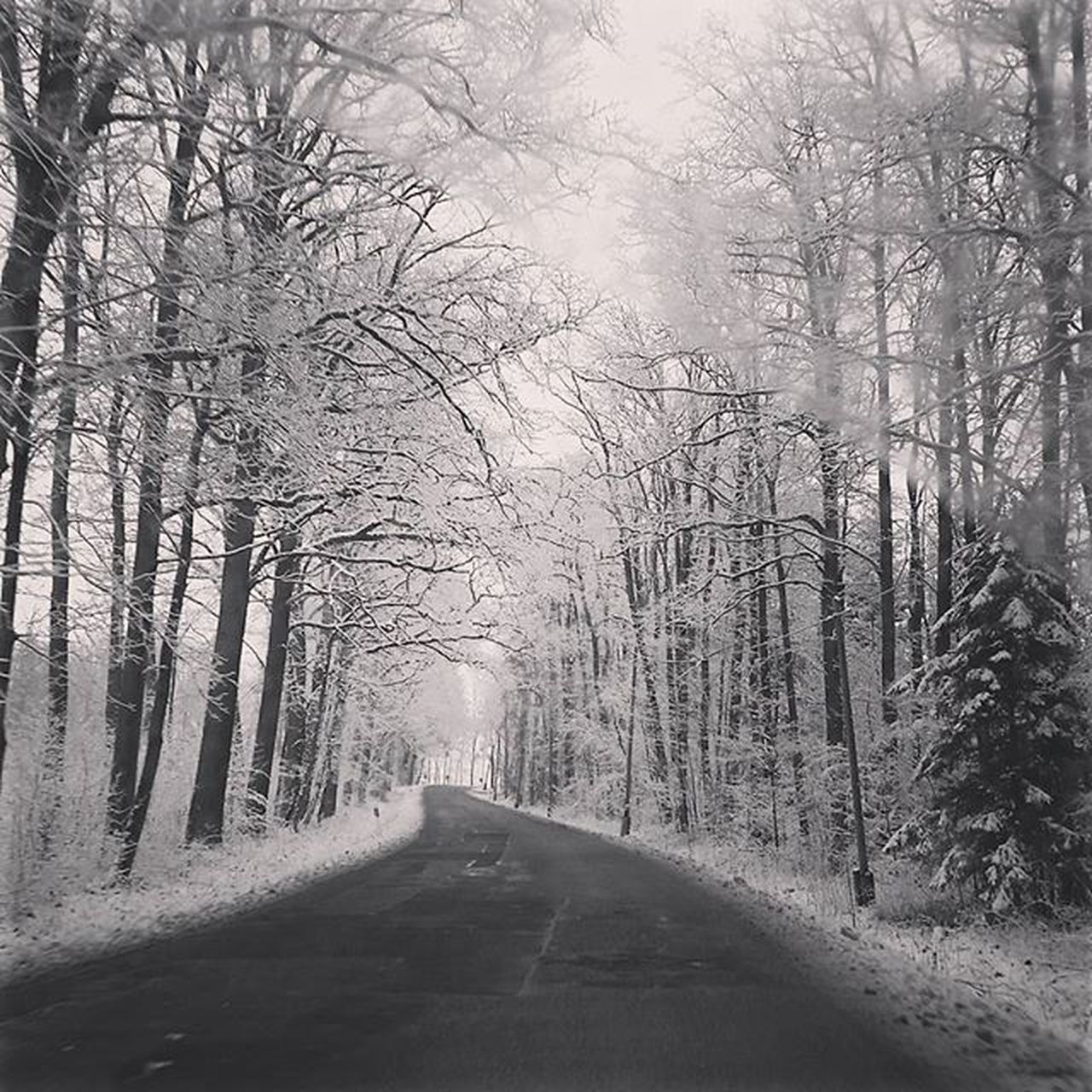 the way forward, bare tree, tree, road, nature, winter, no people, tranquil scene, tranquility, forest, outdoors, day, scenics, beauty in nature, branch, snow