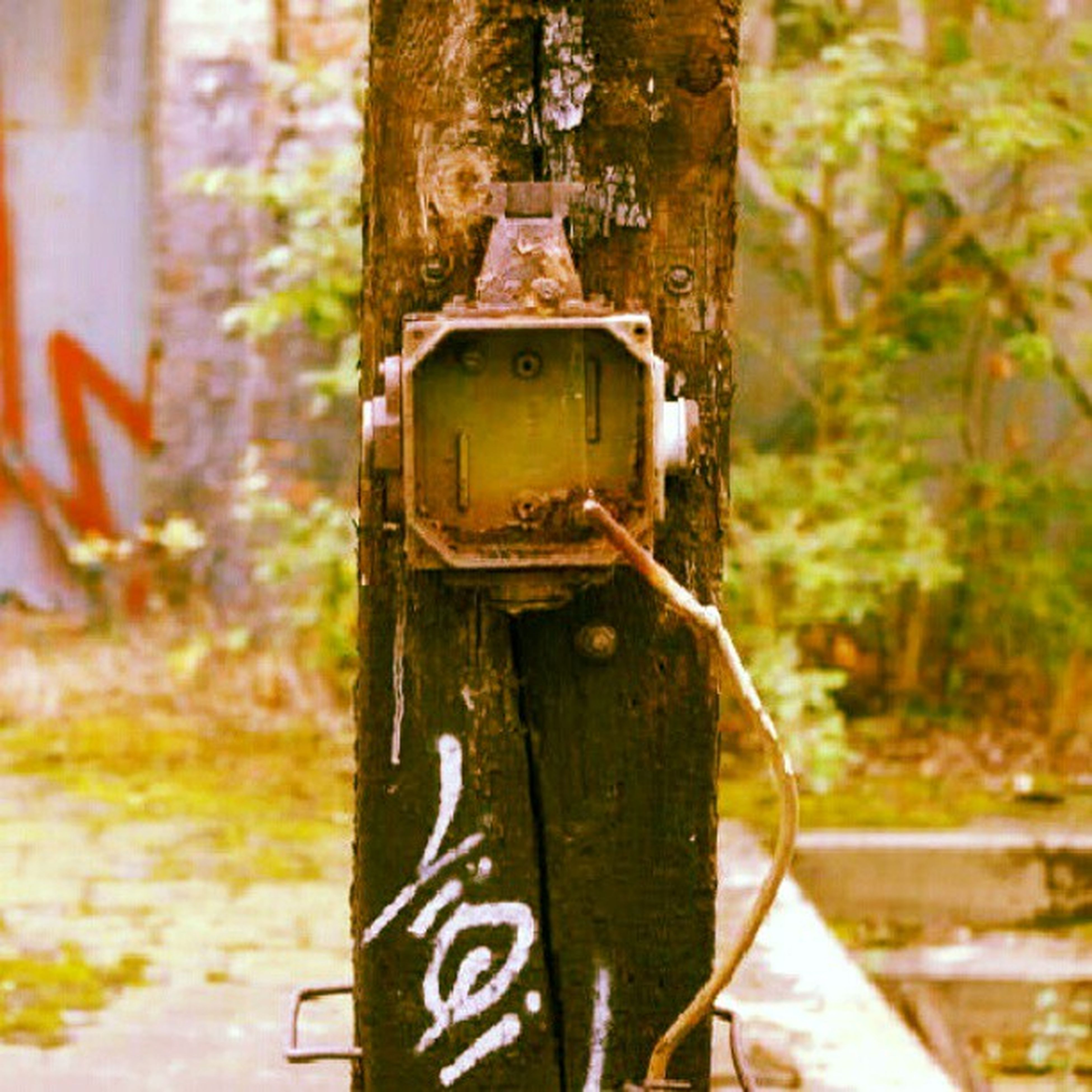 text, communication, focus on foreground, close-up, western script, rusty, metal, old, day, yellow, number, tree, wood - material, weathered, no people, outdoors, padlock, abandoned, selective focus, information sign