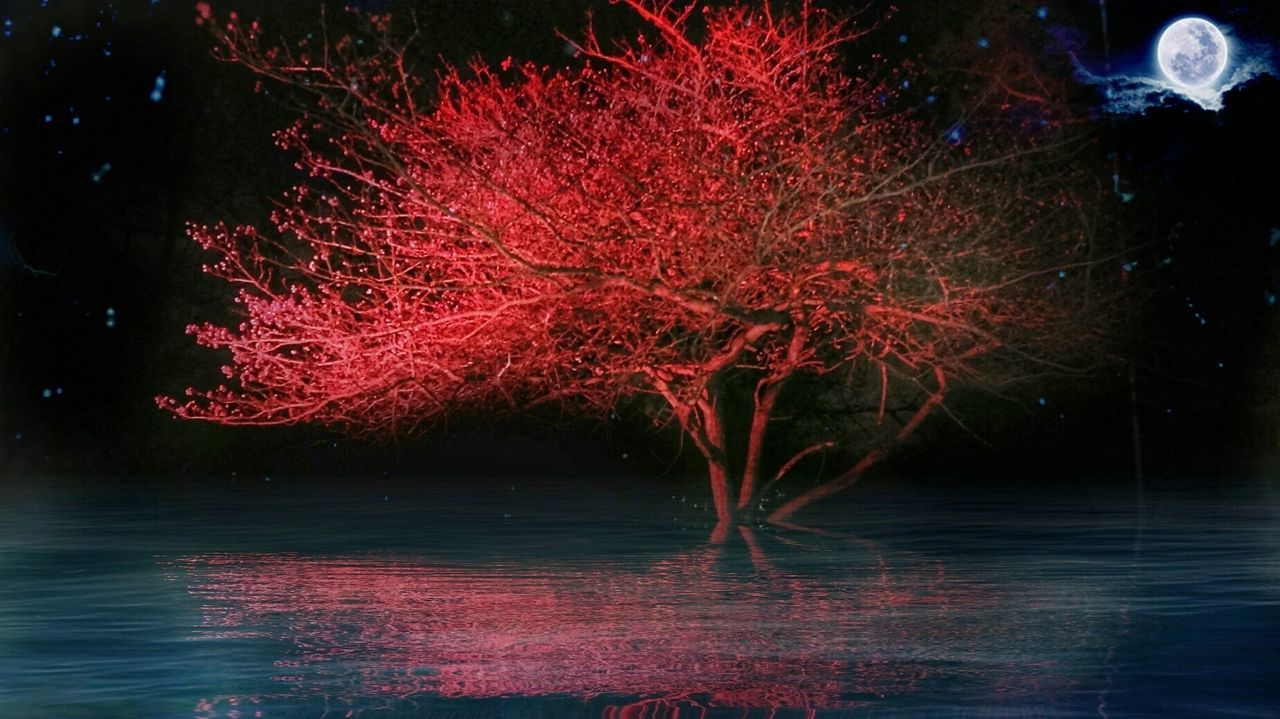 tree, water, night, waterfront, illuminated, red, no people, nature, beauty in nature, outdoors, growth, sky