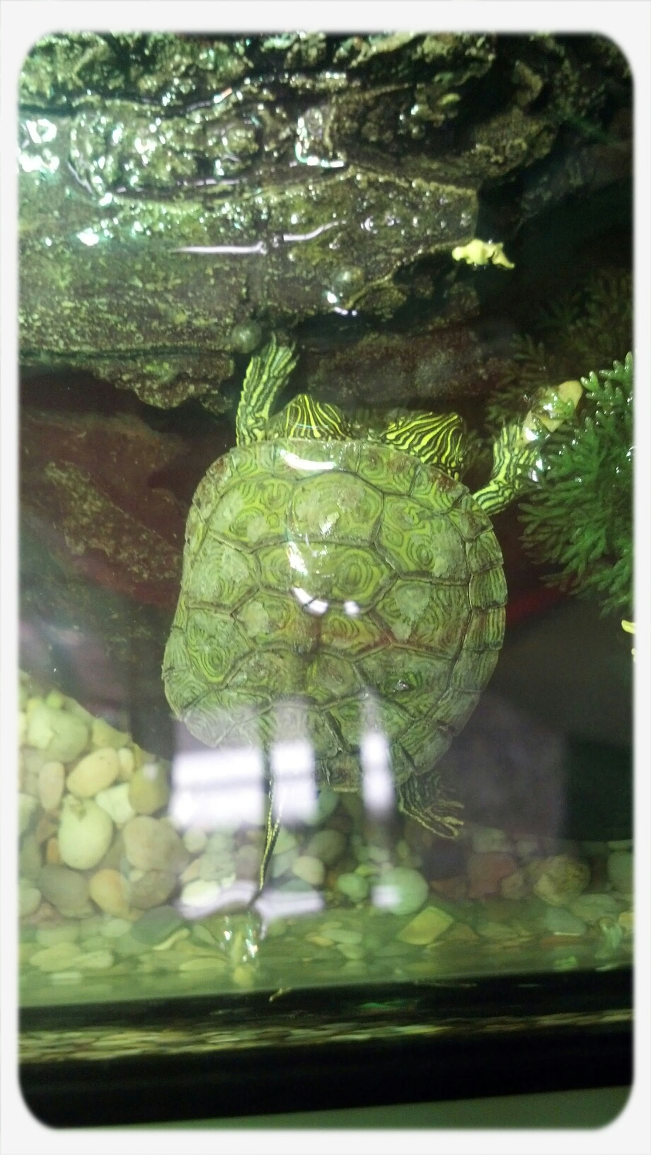 Two headed turtle in San Antonio Zoo Thelmaandlouise Two Headed Turtle San Antonio Zoo Check This Out