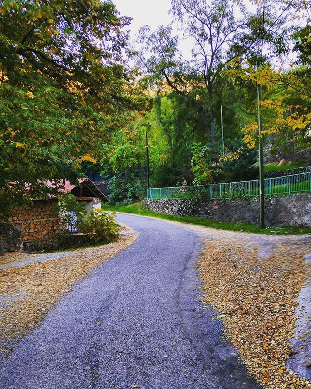 Bu yol nereye gider...Yol bir yere gitmez...Giden sehrin beton yiginlarinda ömrümüz...Erzincan Kemaliye Travel Doğa Traveller Village Köy Sonbahar Güz Gezgin Eğin Seyahat Nature Memleket Yol Autumn Seyyah Yellow Sarı LGG4 G4 Yuvaköyü Turkey Erkuterphotography