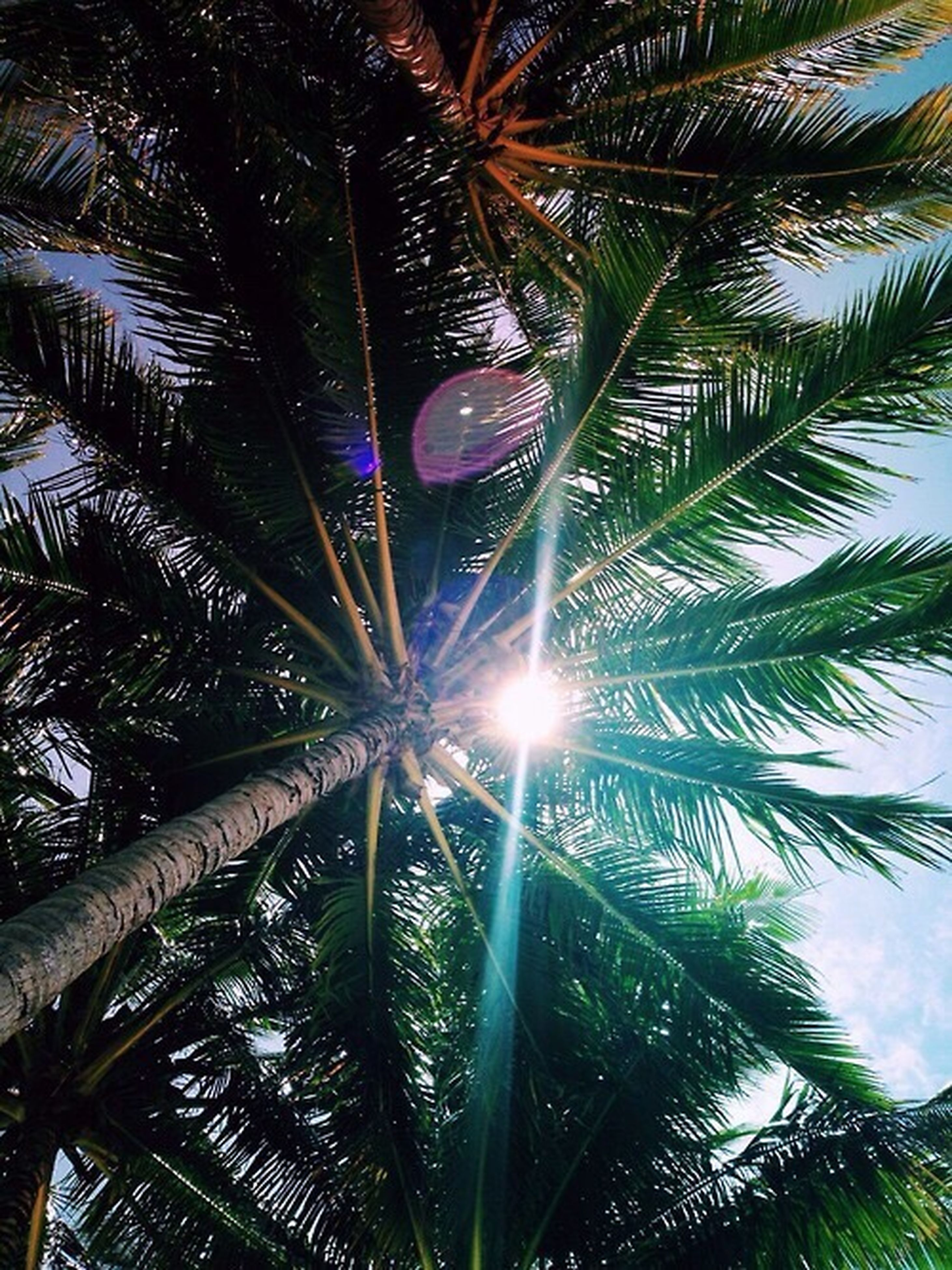 palm tree, tree trunk, low angle view, sunbeam, sun, growth, tree, scenics, sunlight, tranquility, beauty in nature, tall - high, nature, tranquil scene, branch, sky, green color, outdoors, majestic, day, tall, directly below, bright, lens flare, coconut palm tree, lush foliage, blue, back lit, tree canopy, frond, non-urban scene