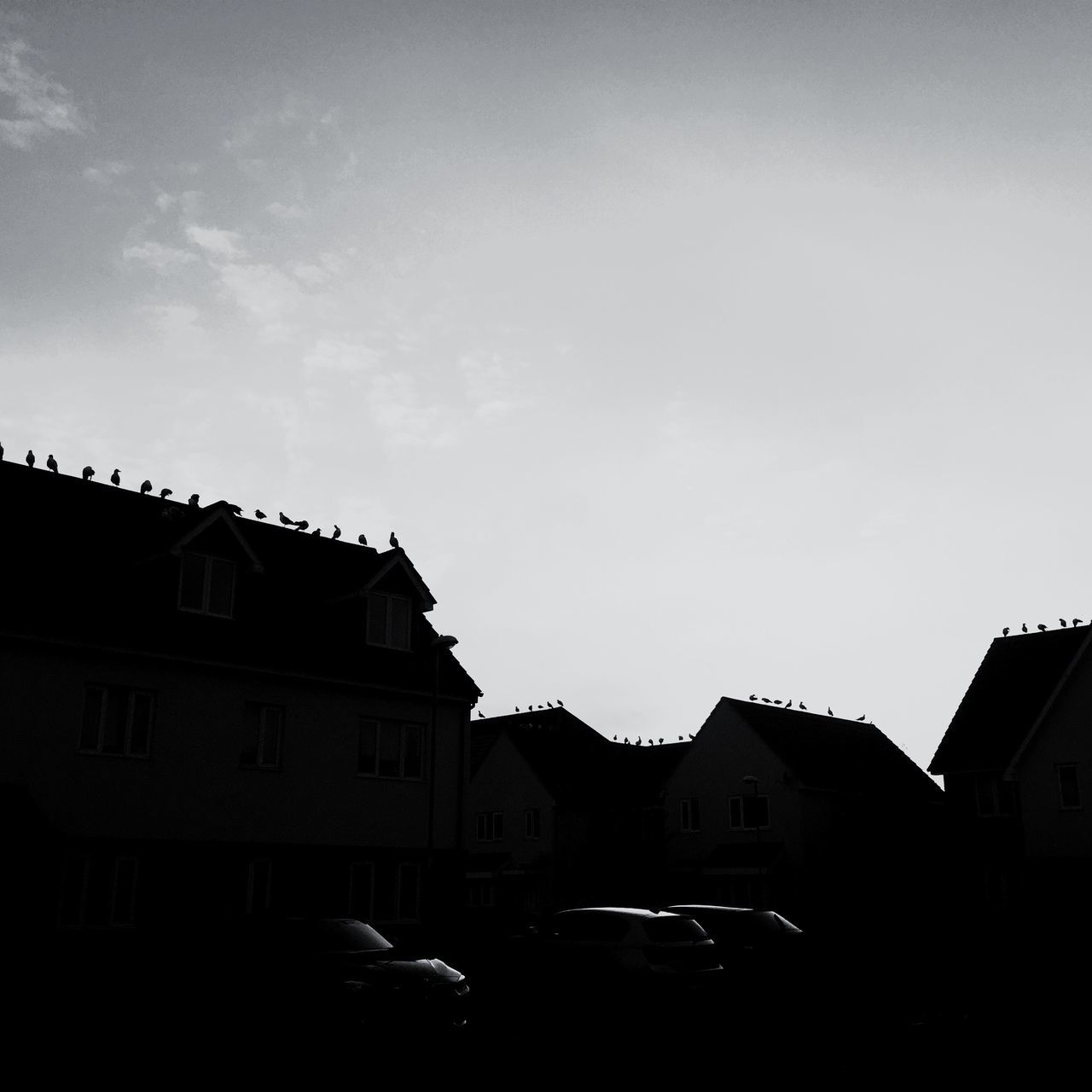 Building Exterior Architecture Built Structure Residential Building House Sky City No People Low Angle View Outdoors Exterior Day Residential  Suburban Sky Suburban Cars Balck And White Birds Birds On The Roof