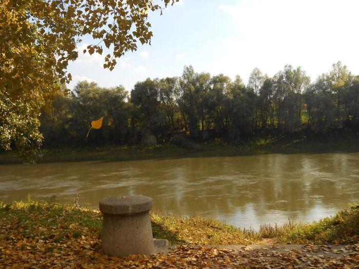 Tisza River Folyópart Folyo ősz Herbst🍁 Hungary