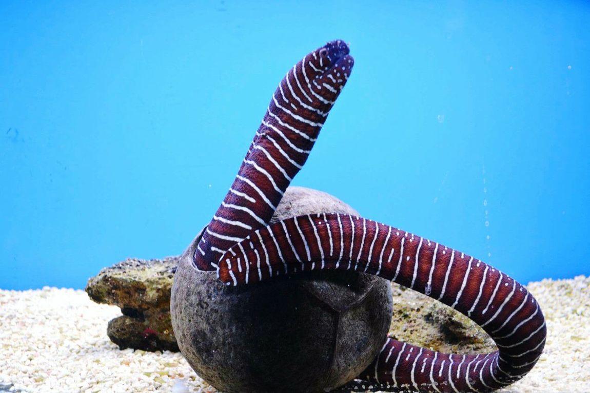 Electric Eel Fish Water Fishtank Aquatic Life Nikonphotography Nikon