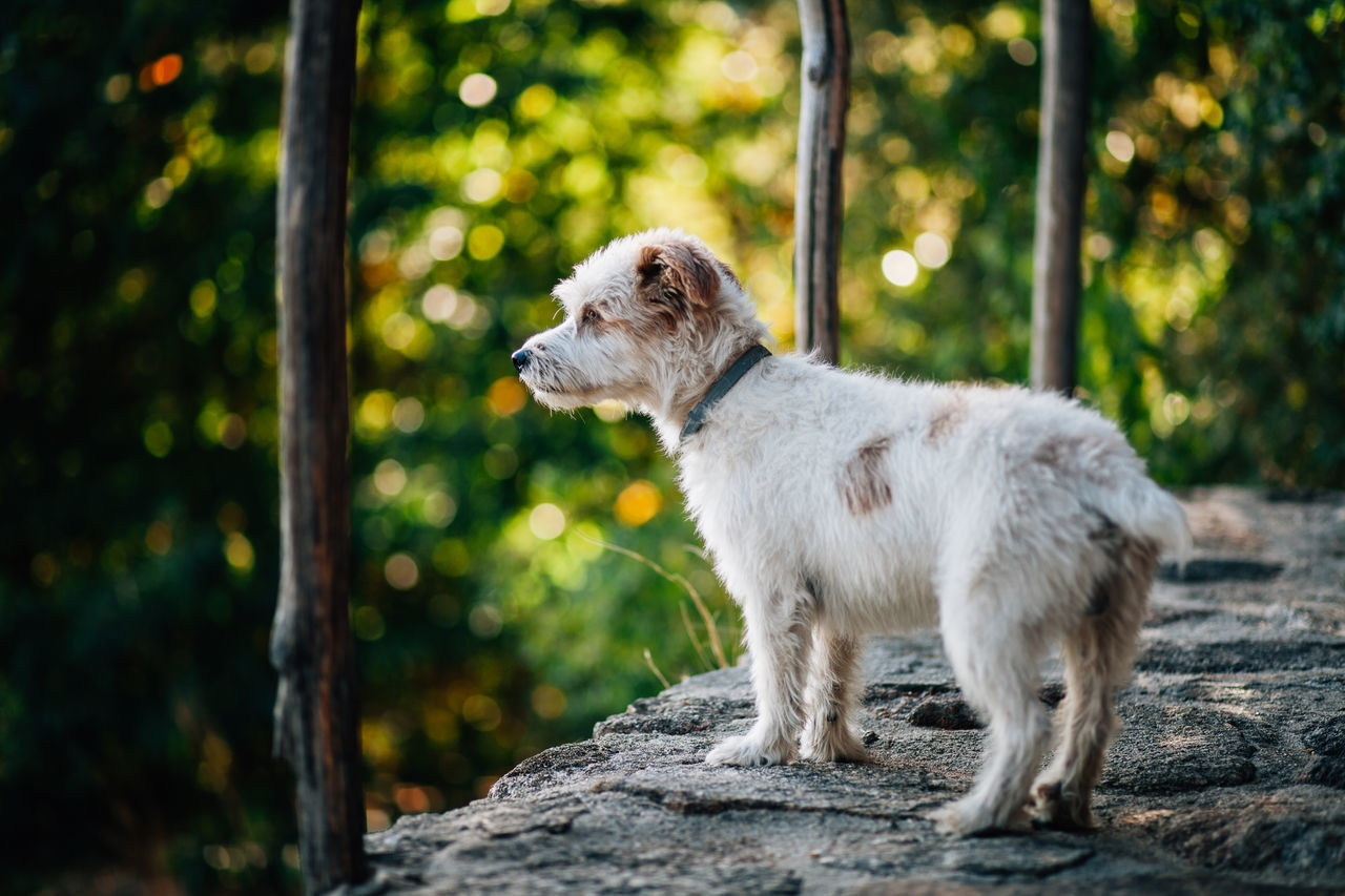 Animal Animal Themes Bokeh Day Dog Dog Love Dogs Domestic Animals Mammal Nature Nature No People One Animal Outdoors Standing Young Animal