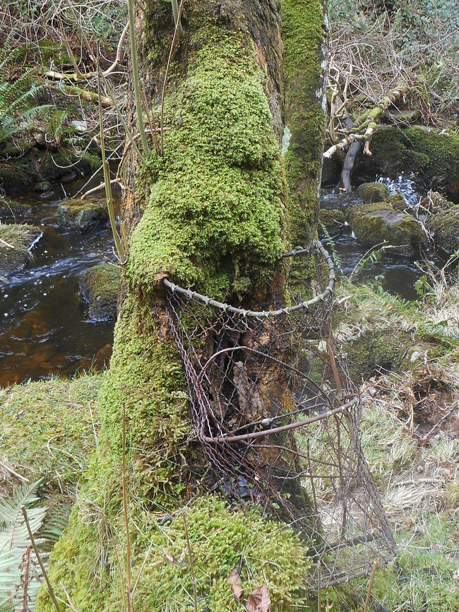 Day Decay Forest Green Green Color Growing Growth Lichen Lush Foliage Moss Nature Nature Takes It Back No People Non-urban Scene Old And Rusty Outdoors Plant Tranquil Scene Tree Wales
