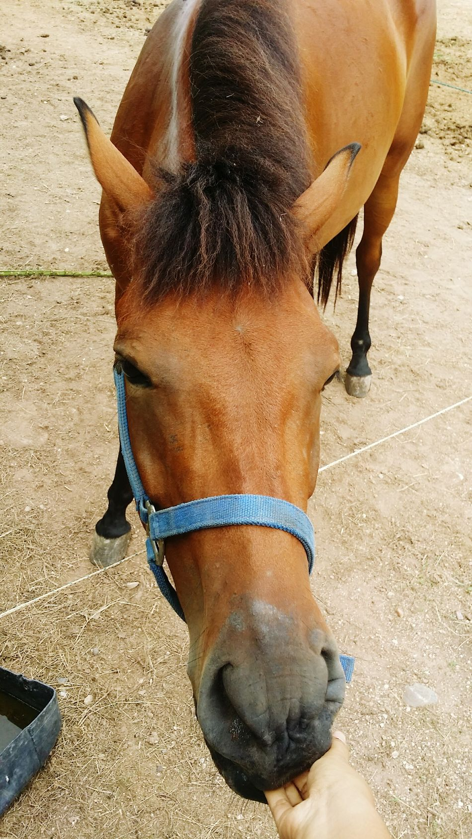 My chuppy. 🙆💗🐴 Midnight Stable Life Horse <3 Baycolor Horselovers