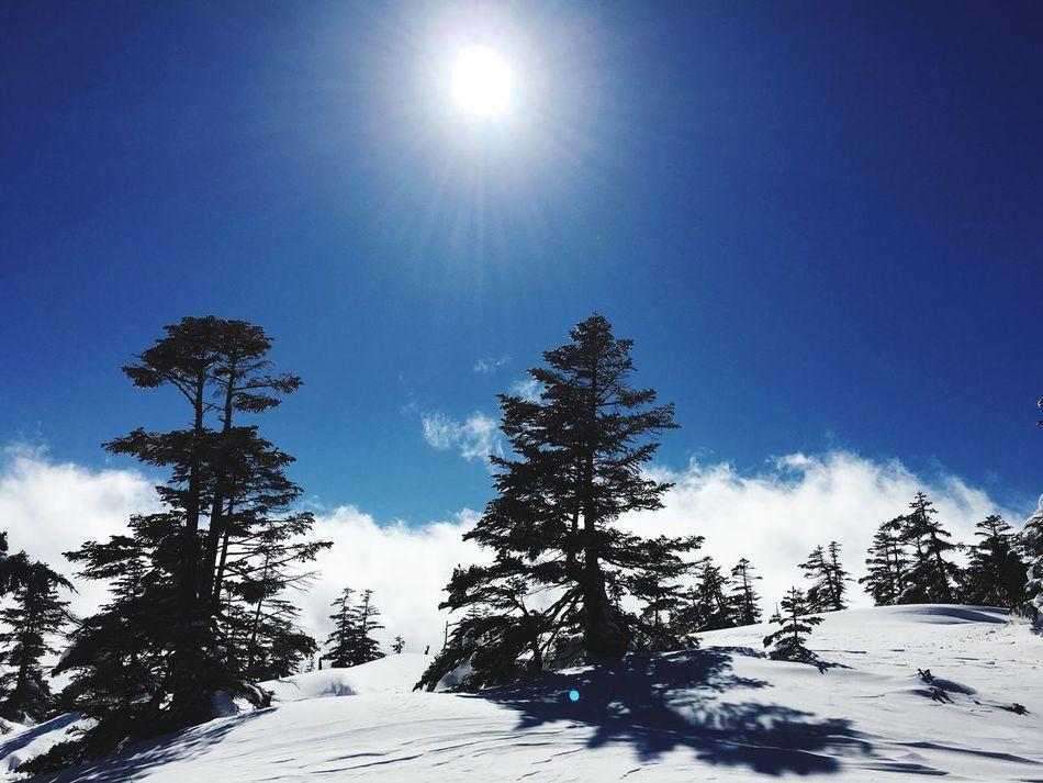 Enjoying Life Blue Blue Sky かぐら Japan Snowboarding Holidays Holiday Holiday POV Happy Happy :) Snow ❄ Snow Trees Tree