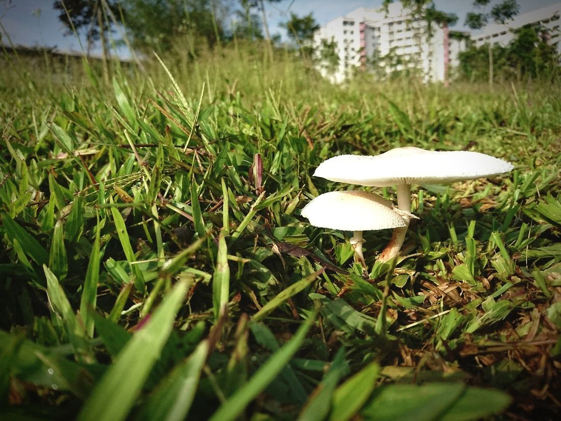 Shelter Growth Nature Grass Mushroom Toadstool Beauty In Nature Close-up Outdoors Field Fragility FreshnessNo People Green Color Day Xperiaphotography Xperiaxzcam Xperiaxz Growth Wild