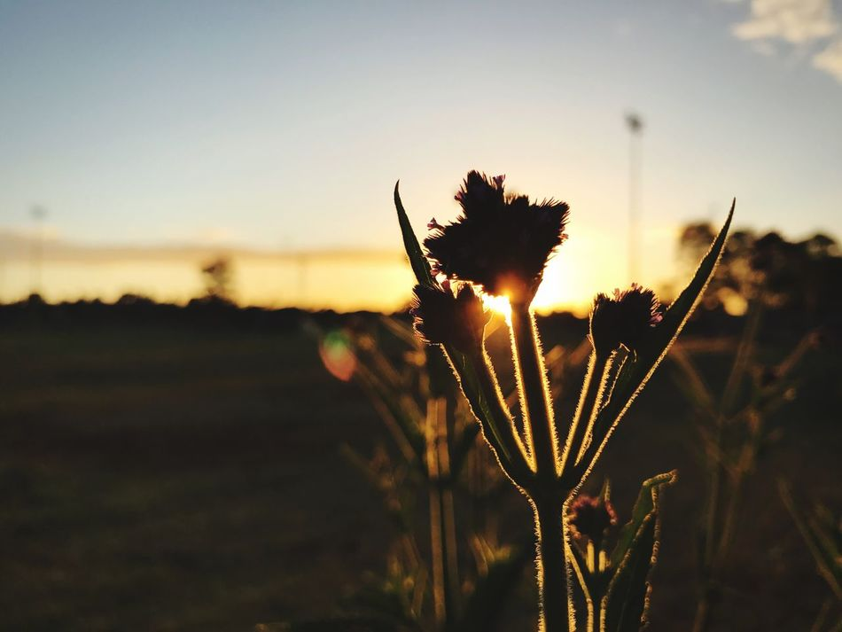 It's all about perspective Growth Focus On Foreground Nature Sunset Close-up Beauty In Nature Outdoors Tranquility Flower Head Exploring Adventure Something Different Perspective Beautiful Nature Amazing Plant Flora Outdoors Photograpghy