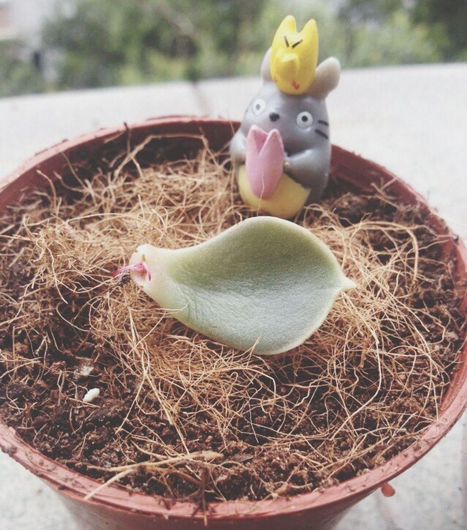Plant 龙猫 New Life