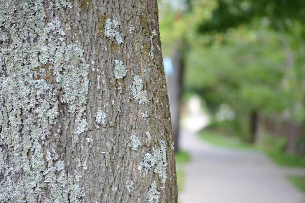 tree trunk, tree, day, textured, focus on foreground, rough, close-up, wood - material, outdoors, no people, nature, bark