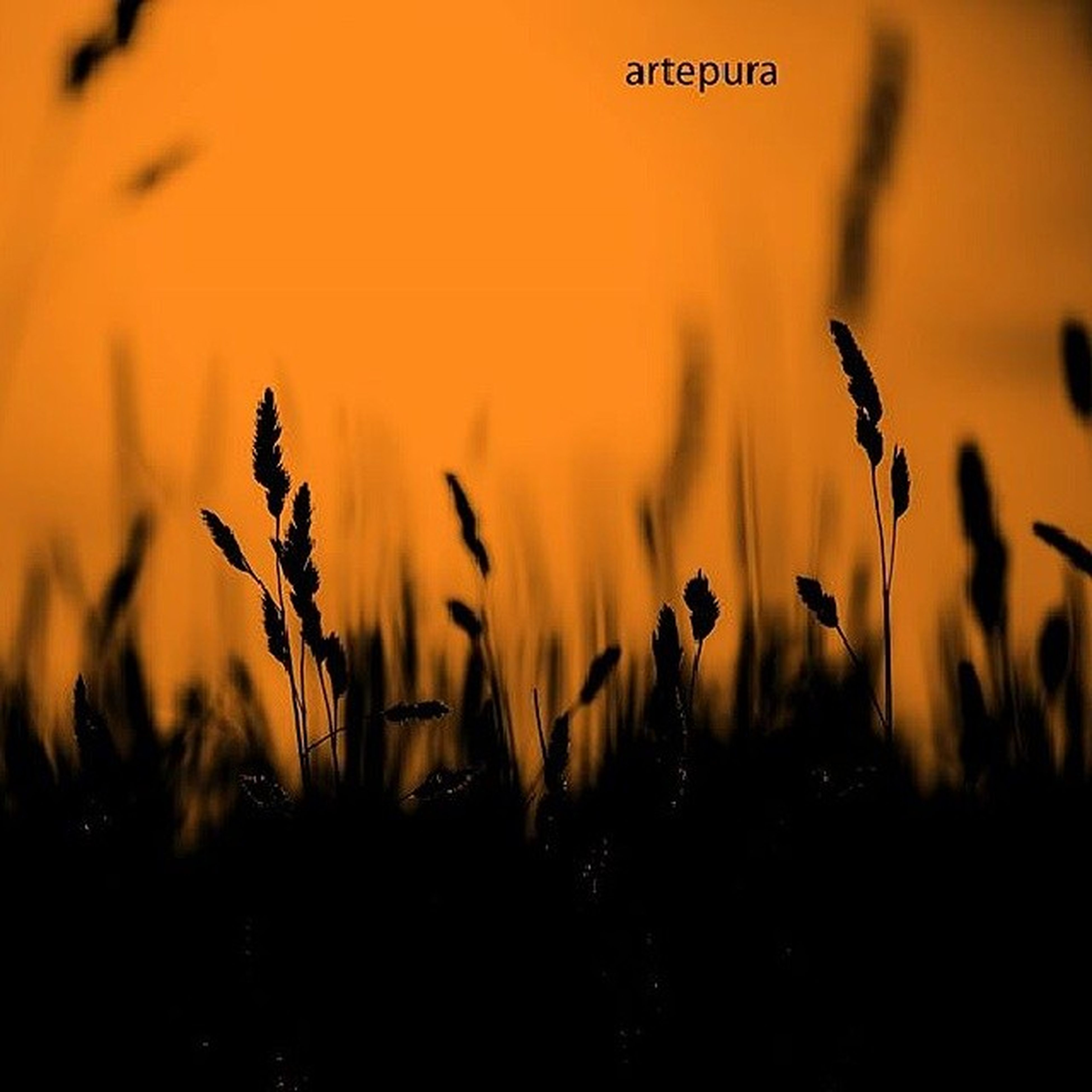sunset, selective focus, orange color, nature, field, focus on foreground, plant, beauty in nature, outdoors, growth, close-up, no people, text, tranquility, silhouette, animal themes, landscape, yellow, dusk