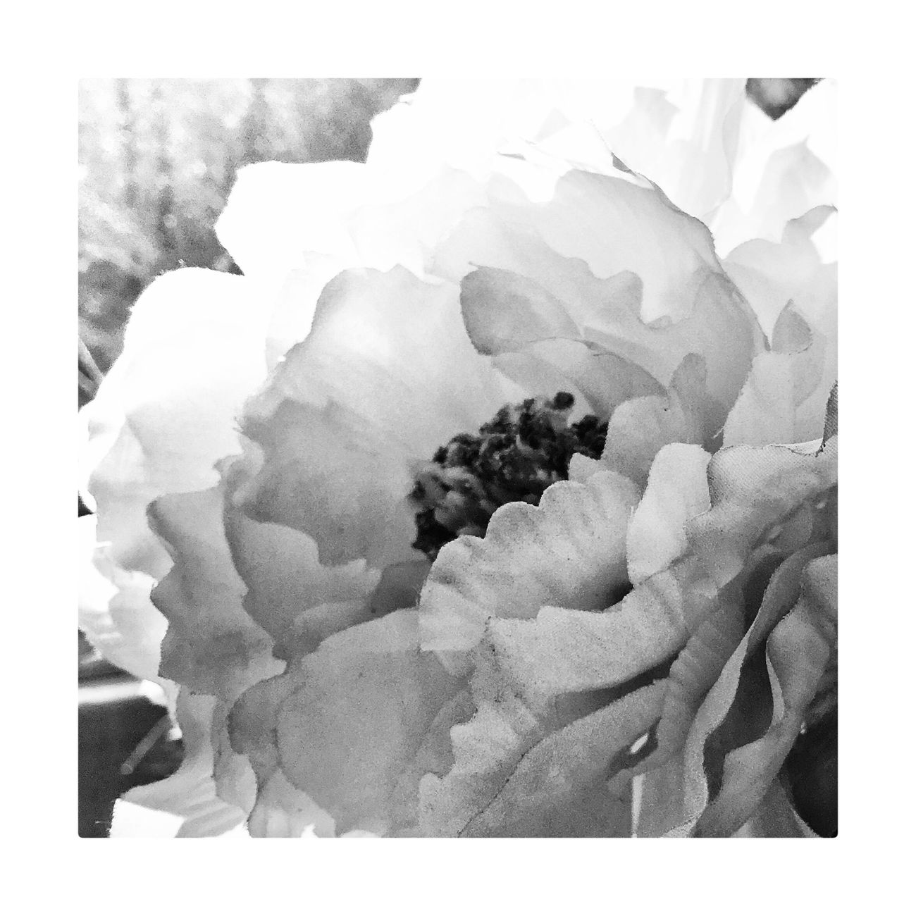 Close-up No People Nature Beauty In Nature Home Interior White Background Freshness Day Nature Blackandwhite Monochrome Black And White Photography