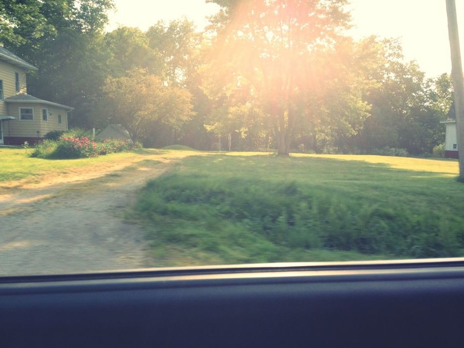 Love When The Light Beams From The Trees
