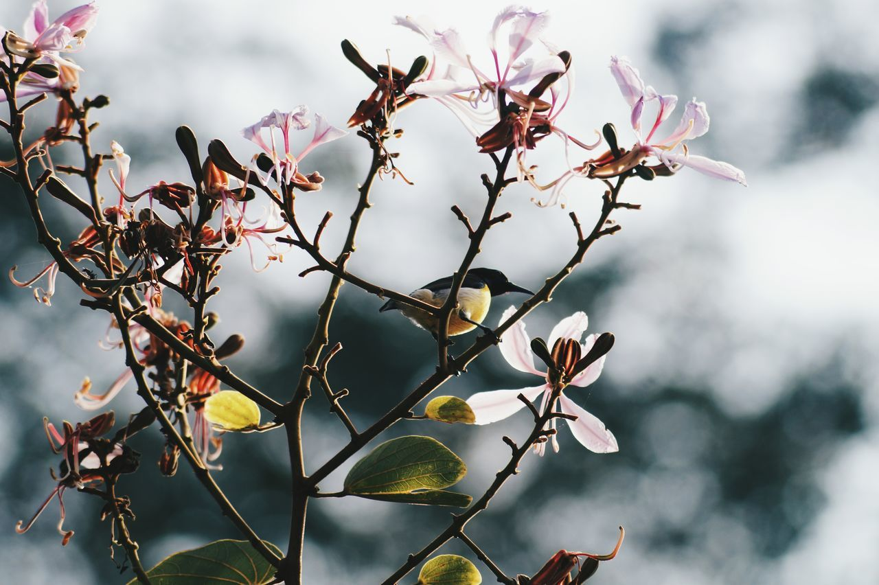 Plant Nature Humingbirds Outdoors Beauty In Nature Close-up No People Branch Sunset Day Scenics Sky Fragility Beauty In Nature Winter Mornings Freshness Flower Head Tree Refreshment Indian Birthday Cake Birds In Flight Birds Eye View Bir_dakika