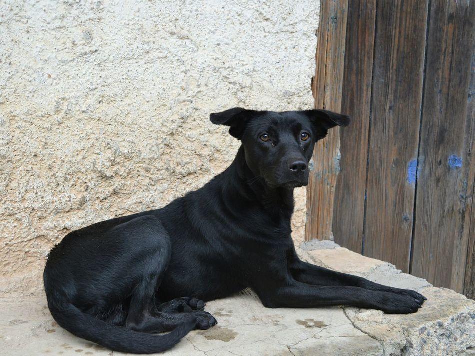 Beautiful stock photos of black, Animal Themes, Black, Building Exterior, Day
