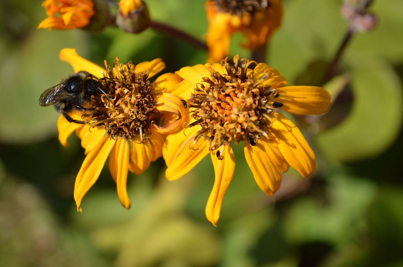 Beautiful stock photos of bee, Arthropod, Beauty In Nature, Bee, Blooming