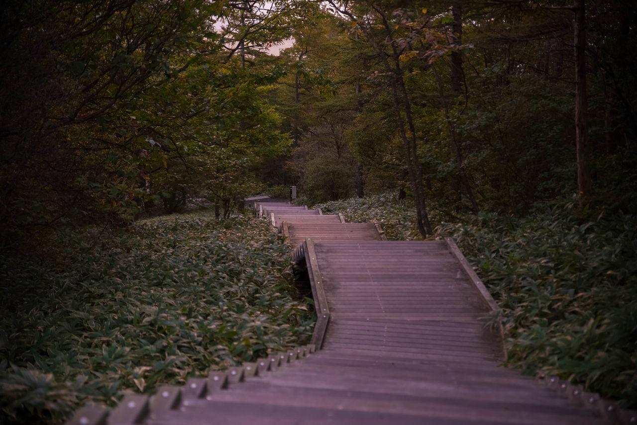 階段写真ばかりで申し訳ないです(^-^; これで霧降高原は終わりですー。Beautiful Japan Nature Photography 霧降高原 日光 Landscape Nice View EyeEm Best Shots EyeEmBestPics