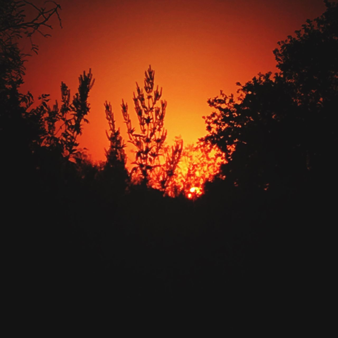 Overnight Success Silhouette Sunset Outline Dark Growth Tree Scenics Beauty In Nature Low Angle View Tranquil Scene Tranquility Nature Fall Fine Art IPhone Texas Texas Skies Sky Orange Color Majestic Colors Of Autumn Dramatic Sky Colors And Patterns Fall Beauty