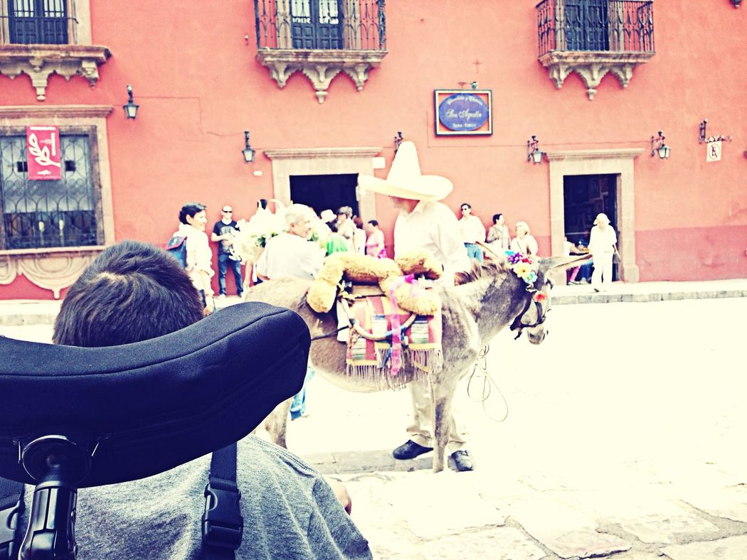 Gerardito y el burro San Miguel De Allende Check This Out Miangel Discapacidad