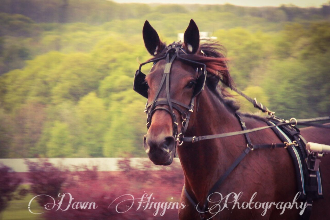 horse, text, communication, domestic animals, mammal, animal themes, day, outdoors, no people, nature