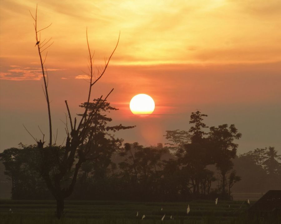 Sunset Silhouette Orange Color Landscape Nature Tree Sun Sky Beauty In Nature Cloud - Sky Scenics Beauty Rural Scene No People Dawn Highlands Dramatic Sky Twig Dry Field Farms Village Scene Naturelovers Canon550D 180mm