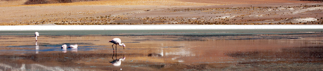 flamingo, animals in the wild, reflection, animal themes, lake, water, nature, bird, no people, day, outdoors, landscape, scenics, salt flat, beauty in nature