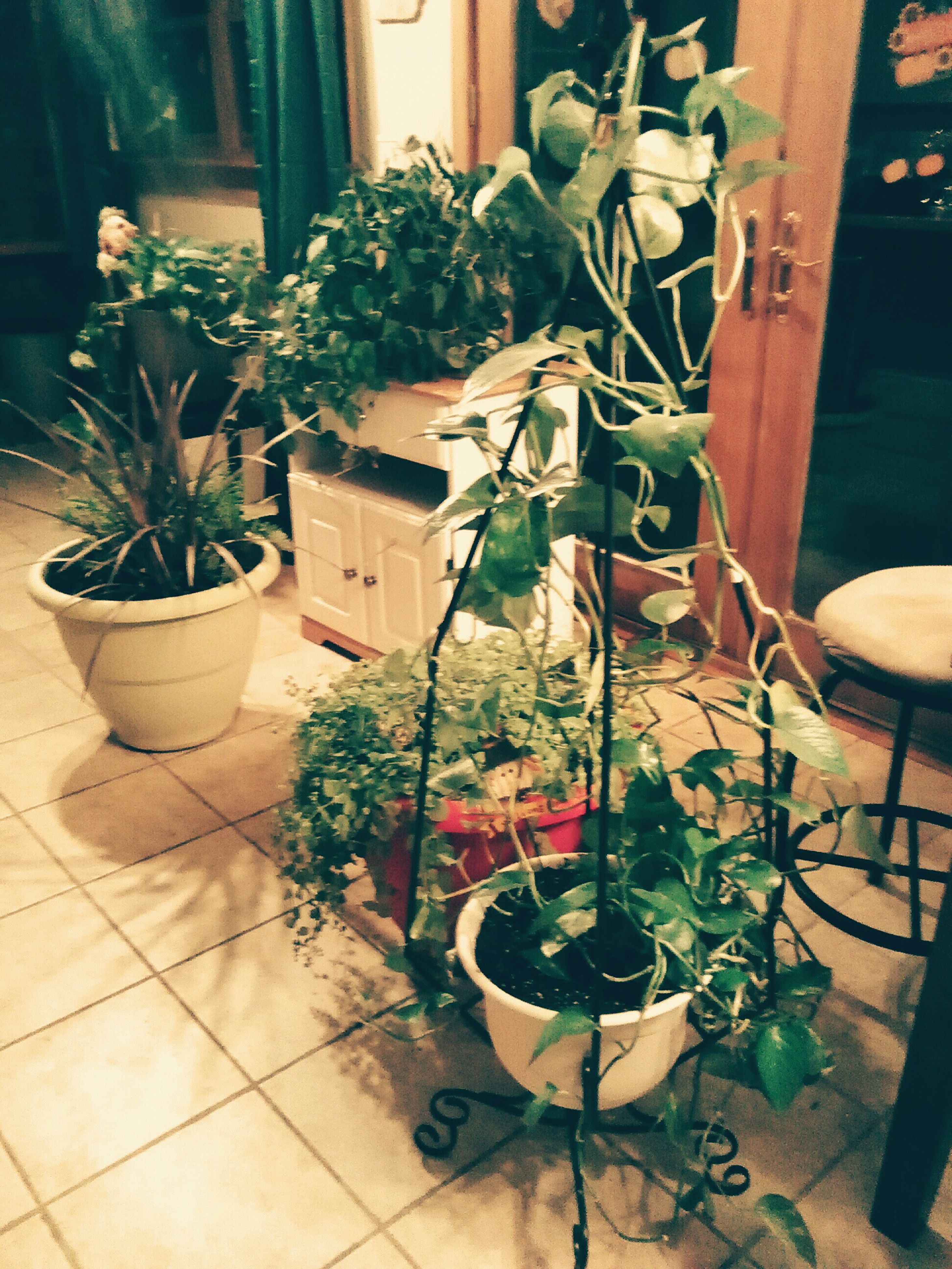 potted plant, plant, growth, flower pot, chair, indoors, table, flower, house, pot plant, front or back yard, built structure, leaf, architecture, no people, high angle view, building exterior, nature, wall - building feature, home interior