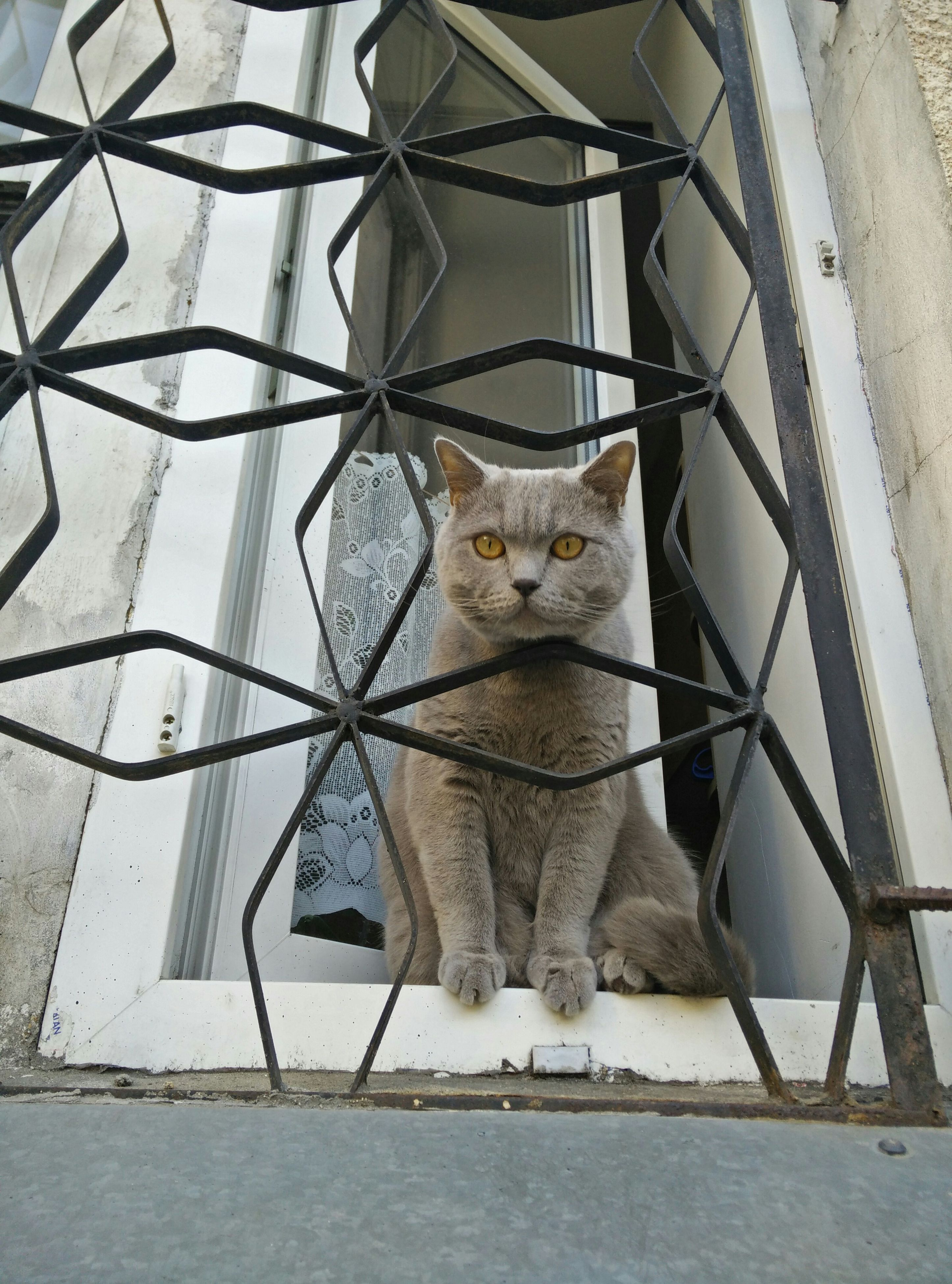 domestic animals, animal themes, mammal, one animal, pets, cage, portrait, domestic cat, white color, day, no people, cat, looking at camera, dog, chair, outdoors, metal, fence, built structure, close-up