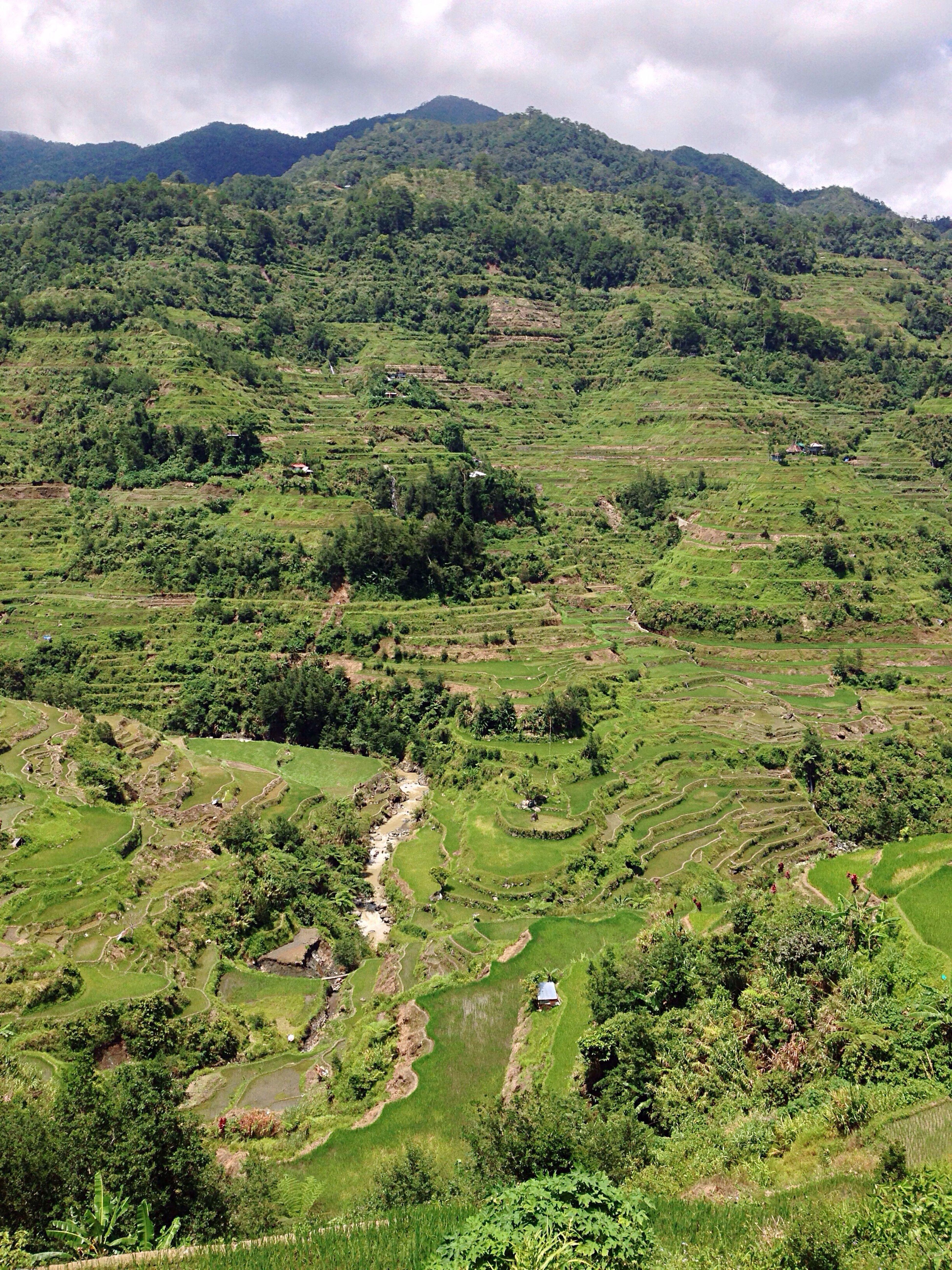 Scenery Shots Banue Rice Terraces Rice Terraces Eyeem Philippines Nature Philippines