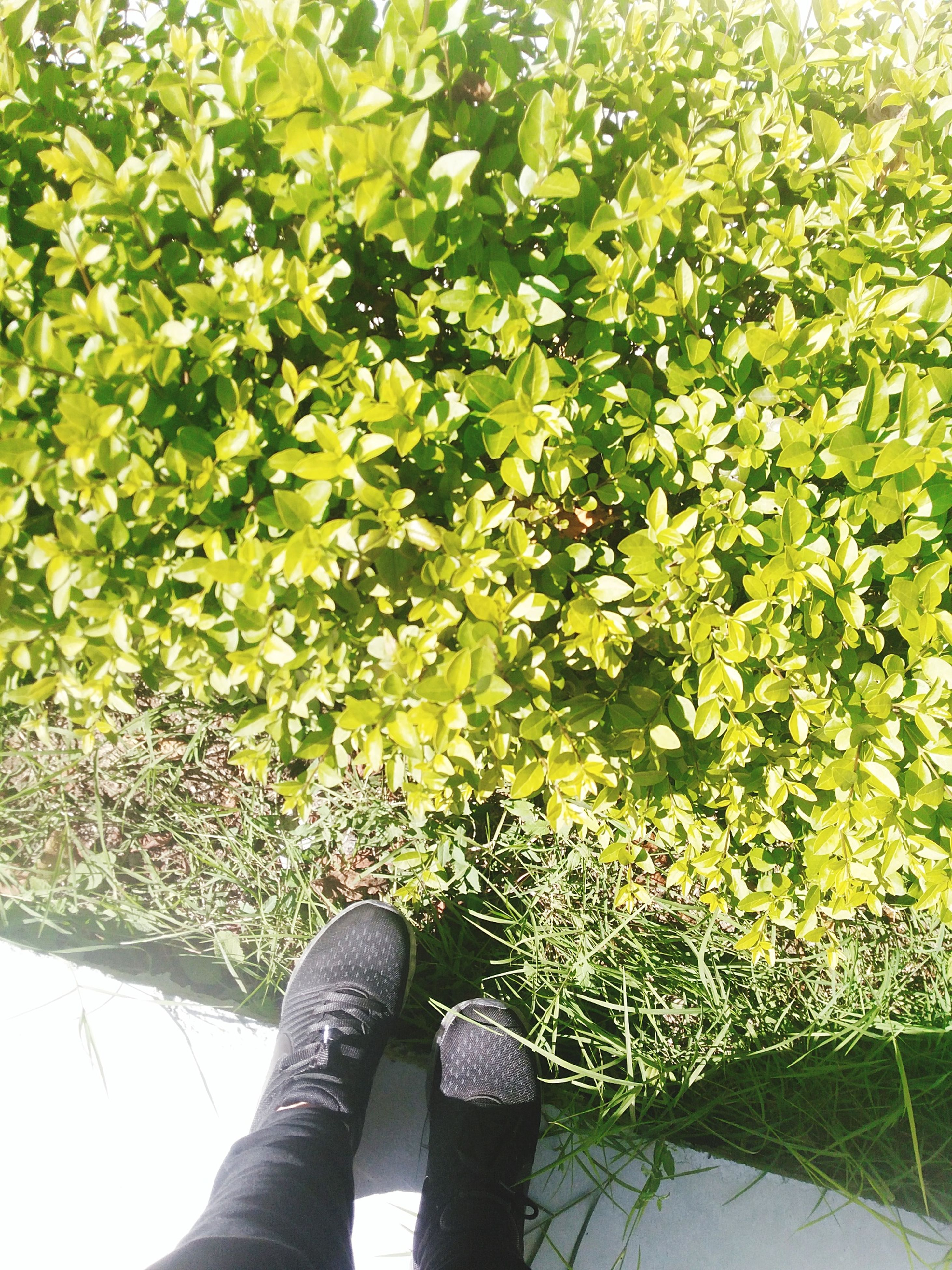 human body part, one person, growth, real people, human leg, low section, green color, plant, nature, shoe, day, outdoors, leaf, beauty in nature, grass, close-up, people