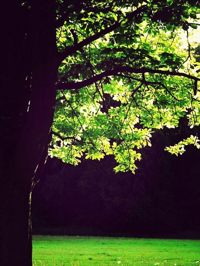 Decksteinerweiher Sunshine Trees Treeporn# Landscape #sky #horizon #cloudporn