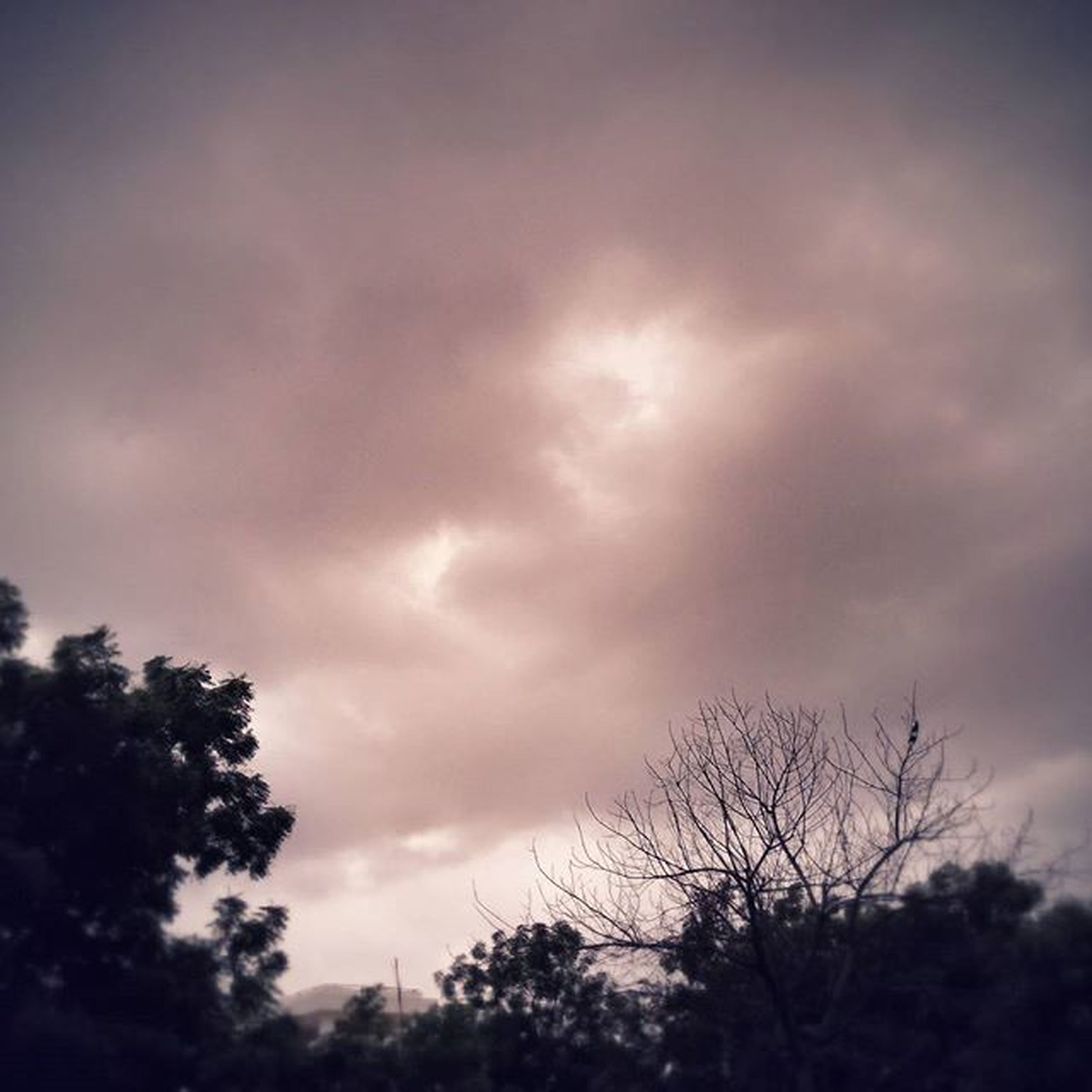 sky, tree, cloud - sky, low angle view, cloudy, silhouette, tranquility, weather, overcast, beauty in nature, nature, scenics, tranquil scene, cloud, branch, dusk, growth, storm cloud, outdoors, no people