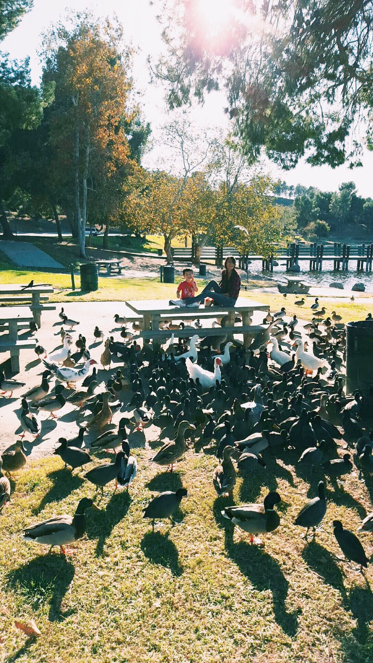 Ducks Feeding The Birds Nephewlove Bonelli