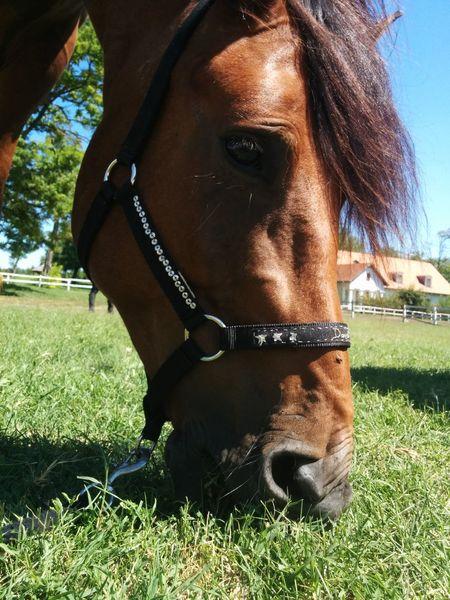 My horse ??? Horse Horse Riding Love Beauty
