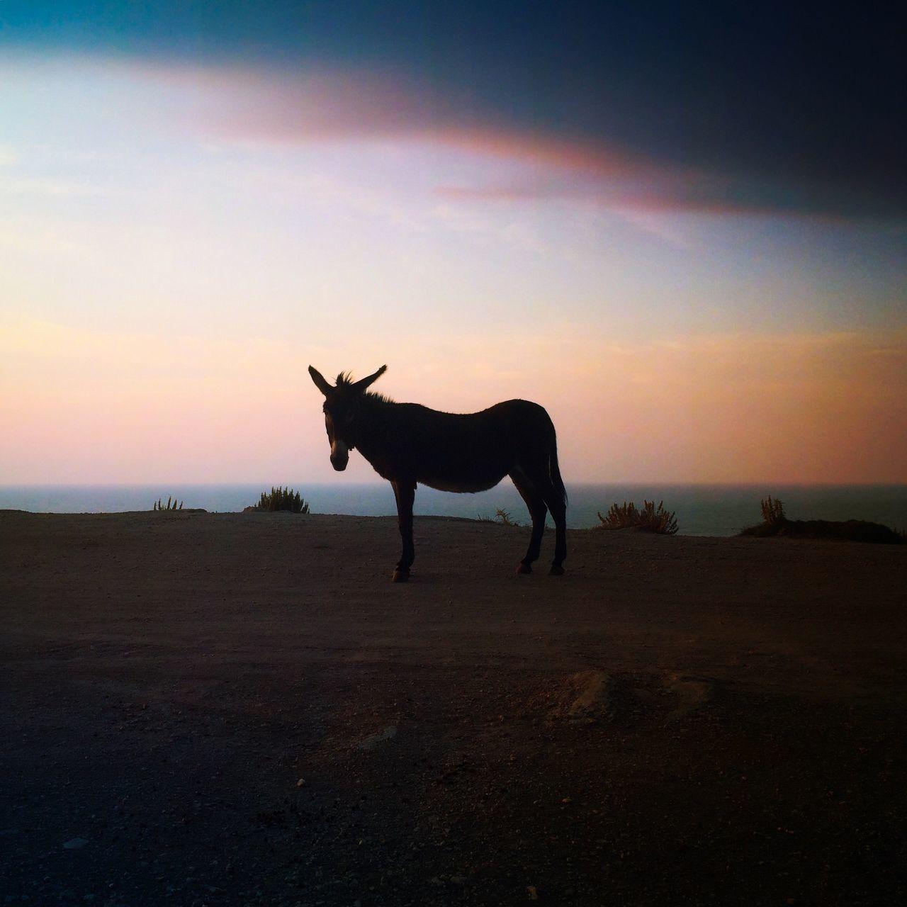 Beautiful stock photos of donkey, Animal Themes, Beach, Domestic Animals, Donkey