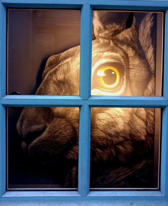 Rabbit Lapin Par La Fenetre Fenetre De L Ame Window Blue Eye