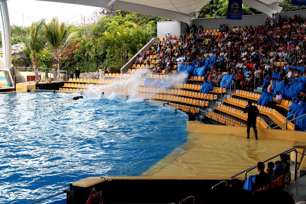 LoroParque Nasse Leute Orca Spaß Splashing Tennerifa Vergnügen Water
