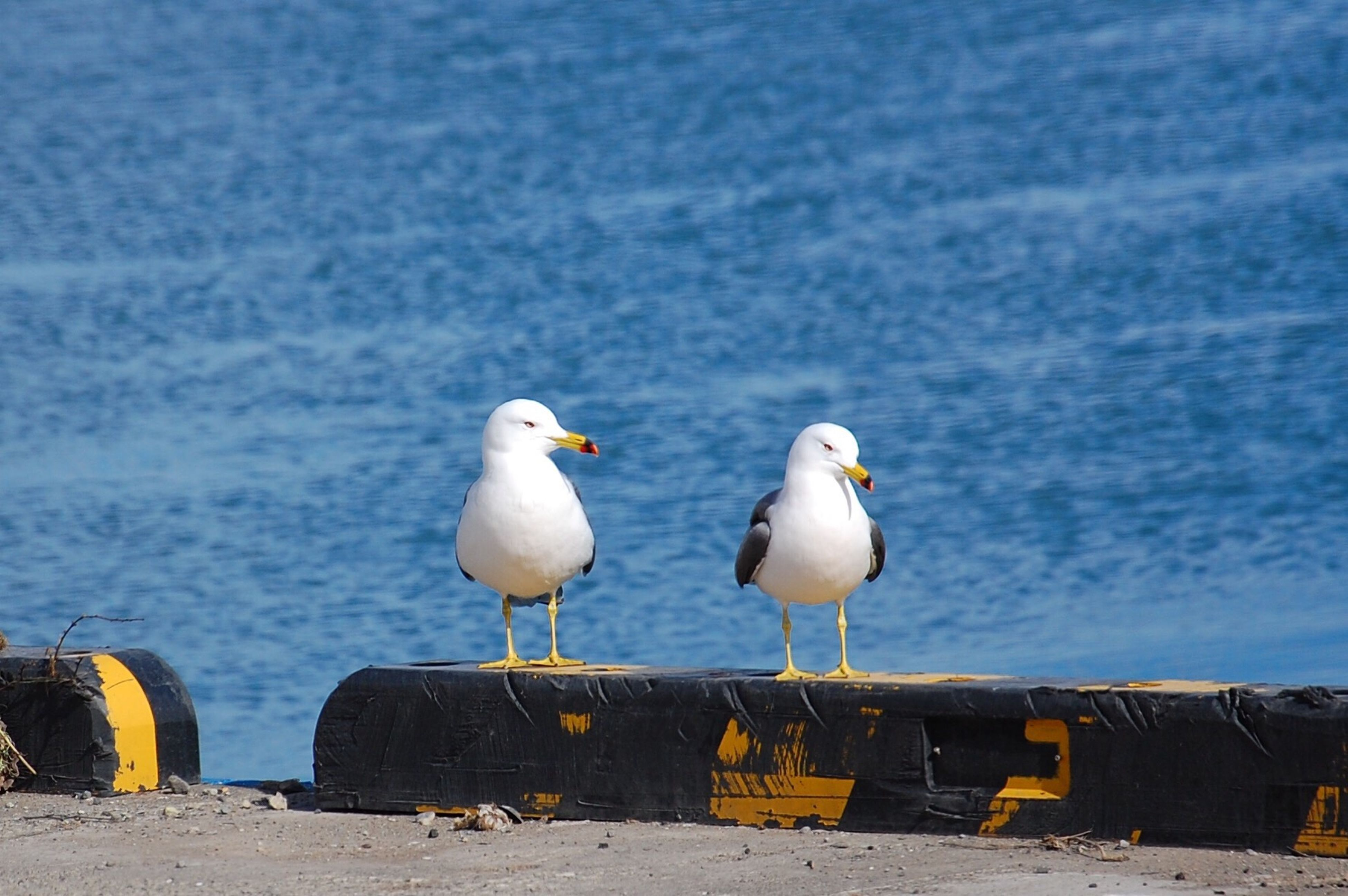 animal themes, bird, animals in the wild, seagull, water, sea, wildlife, perching, rippled, blue, ocean, togetherness, focus on foreground, tranquility, shore, nature, day, outdoors, zoology, seascape, seaside