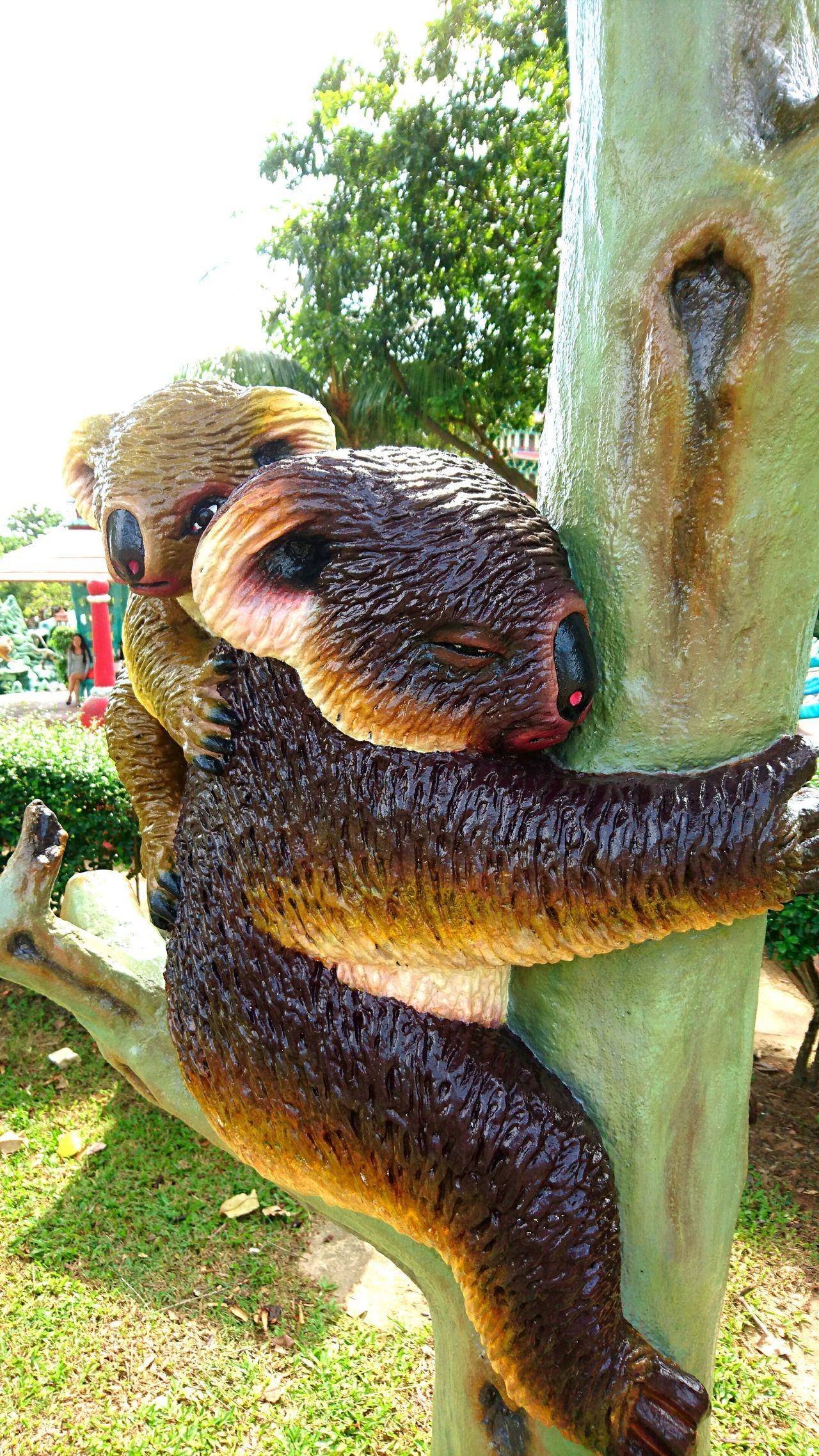 Bright Day Randomshot Singapore Hawparvilla Throwback Statue Koala Bear