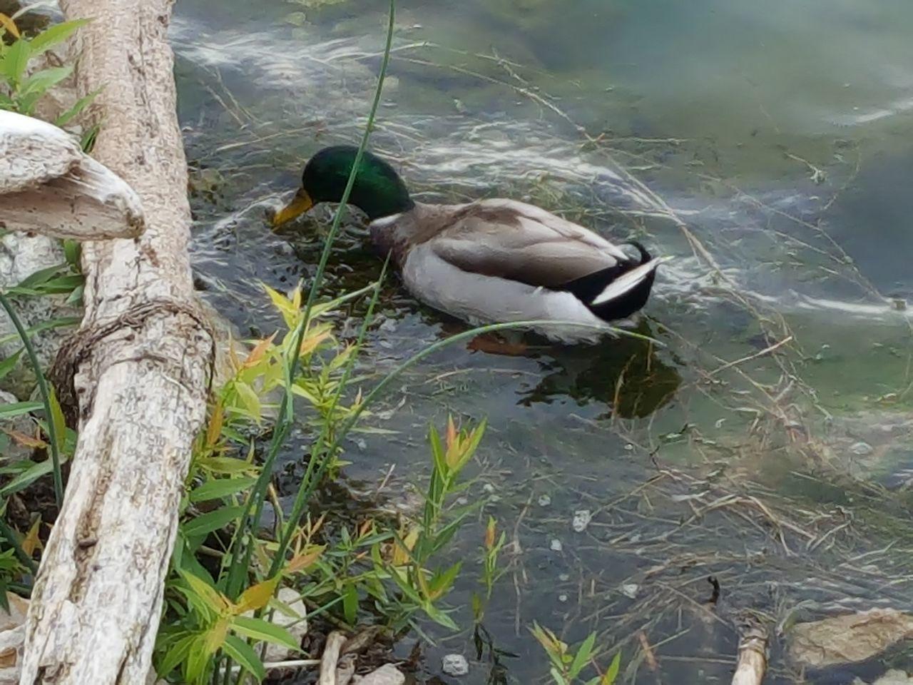 Duck Lake Michigan